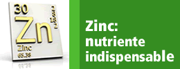 Zinc: Nutriente indispesable